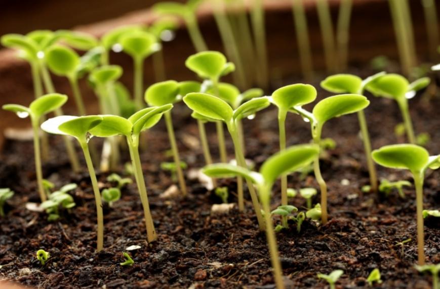 Протравители семян как средство борьбы с вредителями