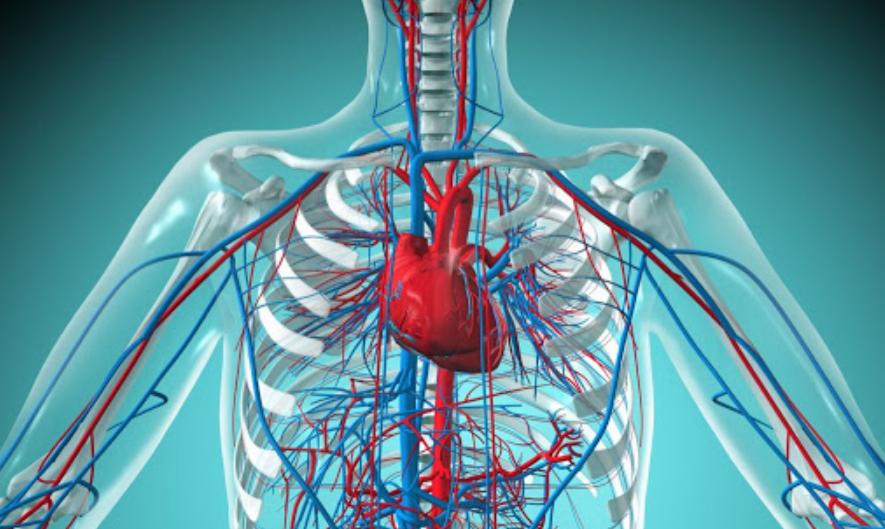 БАДы NOW Foods для восстановления сердечно-сосудистой системы человека